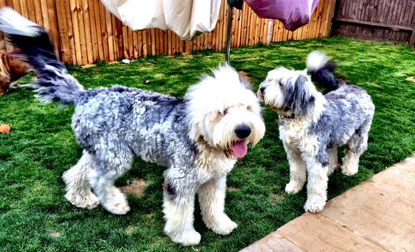 Hamilton mamájának kutyái