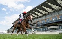 15-ös odds is akadt már - szárnyal a brit lovis tipster
